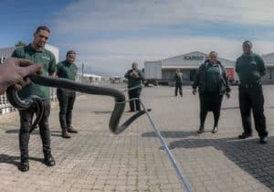 Group of people see a snake caught by snake catcher