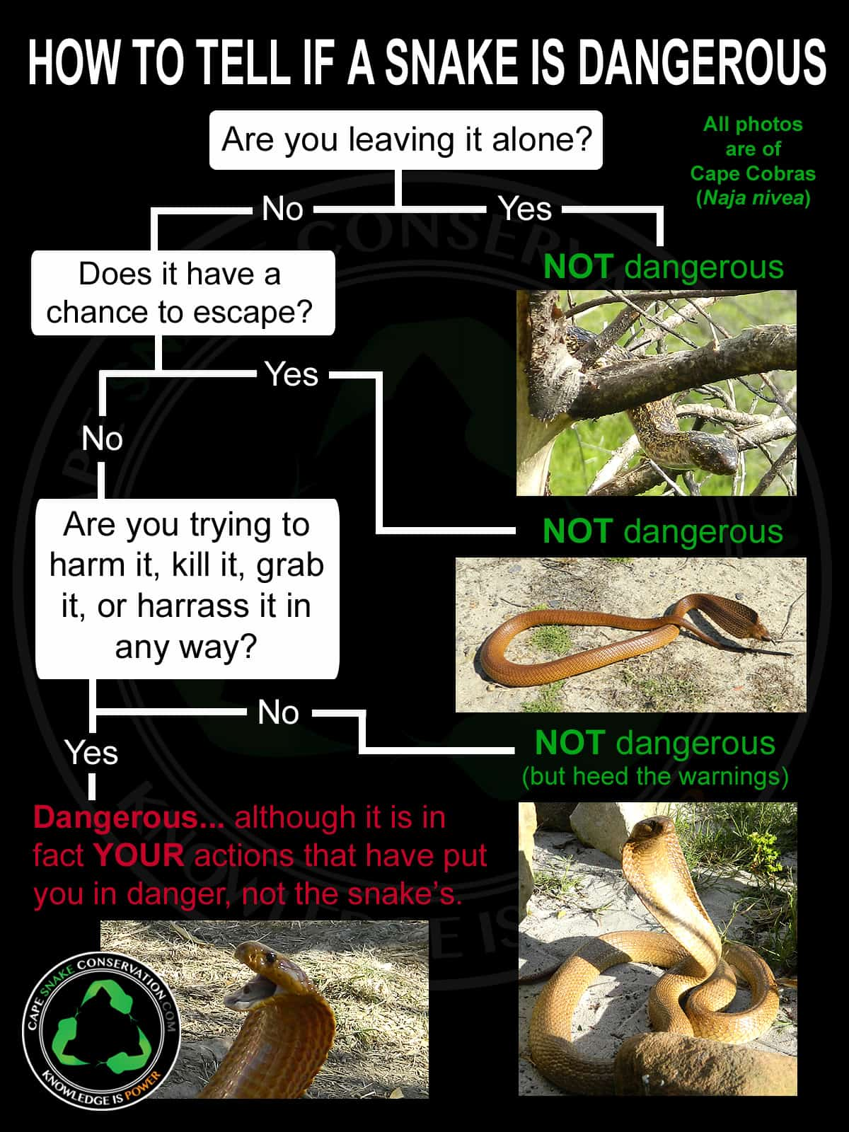 Infographic showing what to do if you see a snake