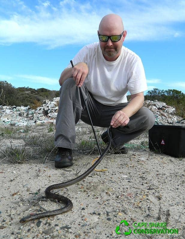Vard handling a Cape Cobra